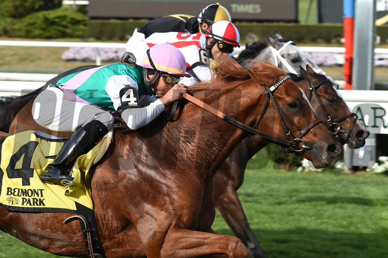 Seismic Wave wins the 2019 English Channel Stakes at Belmont Park<br /> Coglianese Photos/Elsa Lorieul