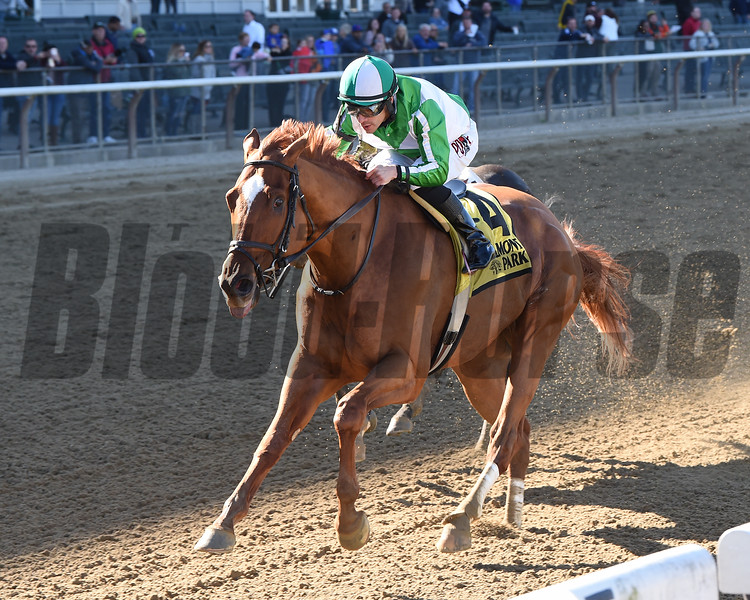 Mr. Buff wins the 2019 Empire Classic at Belmont Park<br /> Coglianese Photos/Chelsea Durand