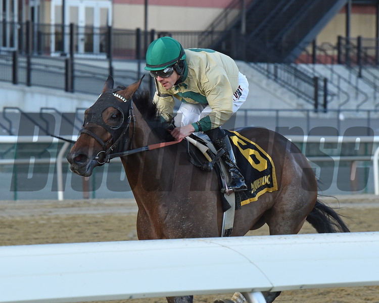 Golden Award wins the 2019 Turnback the Alarm Handicap at Aqueduct<br /> Coglianese Photos/Janet Garaguso