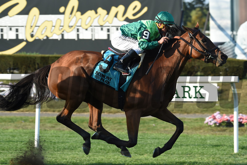 Fifty Five wins the 2019 John Hettinger Stakes at Belmont Park<br /> Coglianese Photos/Elsa Lorieul