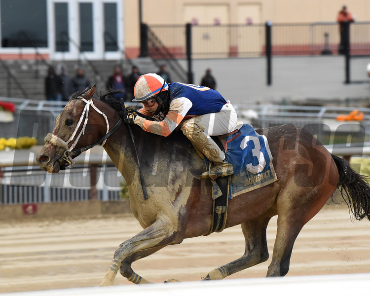 My Boy Tate wins the 2019 New York Stallion Series Stakes at Aqueduct<br /> Coglianese Photos/Chelsea Durand