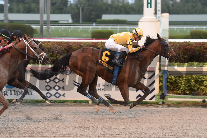 Diamond Oops wins 2019 Mr Prospector Stakes Saturday, December 21 at Gulfstream Park. Photo: Coglianese Photos/Lauren King