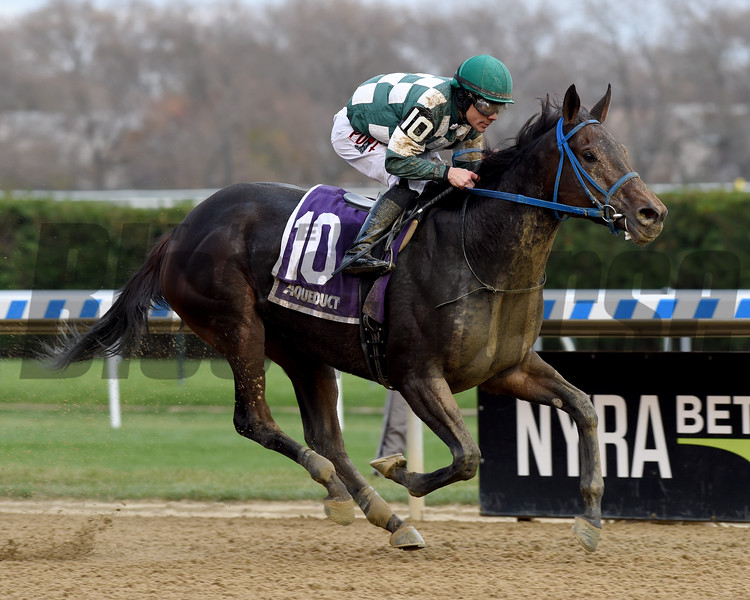Our Super Nova wins the 2019 New York Stallion Series Stakes at Aqueduct. Photo: Coglianese Photos/Chelsea Durand