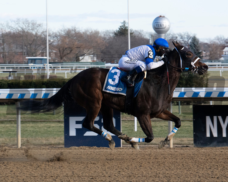 Spiced Perfection wins the 2019 Go for Wand Handicap at Aqueduct<br /> Coglianese Photos/Susie Raisher