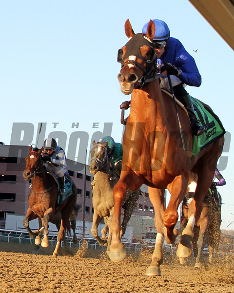 Lake Avenue with Junior Alvarado win the 98th Running of the Demoiselle (GII) at Aqueduct on December 7, 2019. Photo By: Chad B. Harmon
