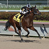 Lady's Island wins the 2019 Sugar Swirl Stakes at Gulfstream Park<br /> Coglianese Photos