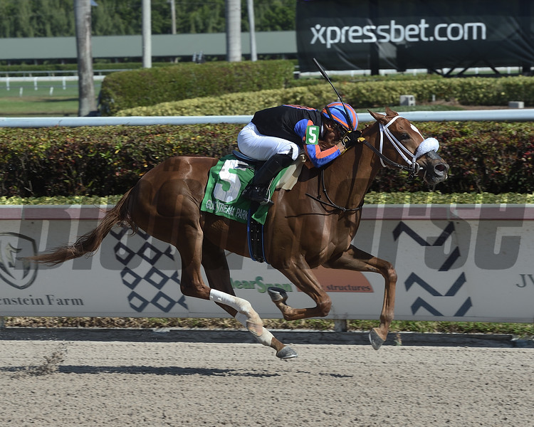Tonalist's Shape wins the 2019 Hut Hut Stakes at Gulfstream Park<br /> First sw for Tonalist<br /> Coglianese Photos/Lauren King