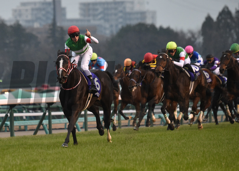 2019 Arima Kinen Grand Prix, won by Lys Gracieux, ridden by Damian Lane, trained by Mr. Yoshito Yahagi, owned by Carrot Farm. Dec. 22nd, 2019 Nakayama Race Course. Photography by Katsumi Saito