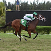 Picara wins the 2019 Millions Filly and Mare Turf Preview Stakes at Gulfstream Park West<br /> Coglianese Photos/Lauren King