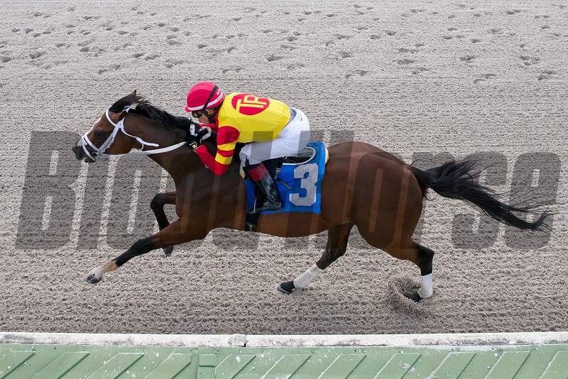Bodexpress wins a maiden special weight at Gulfstream Park West Monday, October 14, 2019. Photo: Coglianese Photos/Ryan Thompson