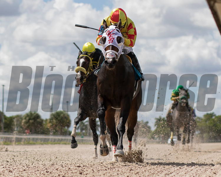 Gran Casique wins a maiden claiming race October 10, 2019 at Gulfstream Park West. Photo: Coglianese Photos/Ryan Thompson