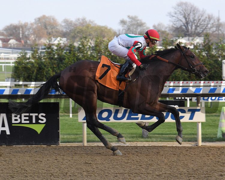 Country Grammer - Maiden Win, Aqueduct, November 11, 2019<br /> Coglianese Photos