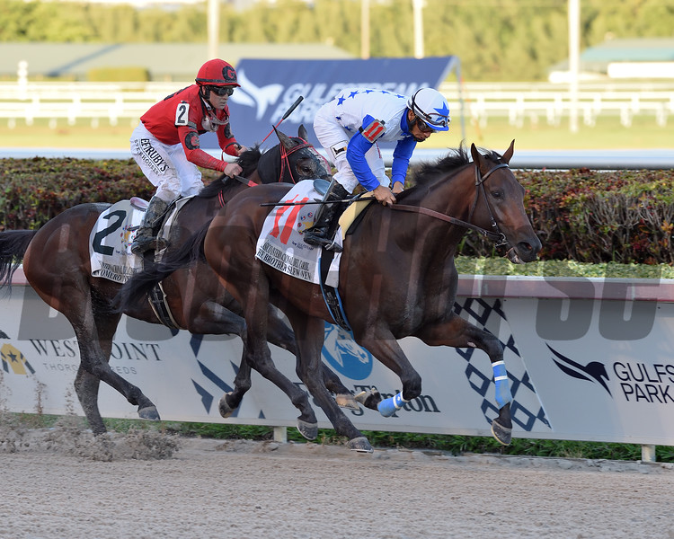 The Brother Slew wins the 2019 Clasico Internacional del Caribe Stakes at Gulfstream Park<br /> Coglianese Photos