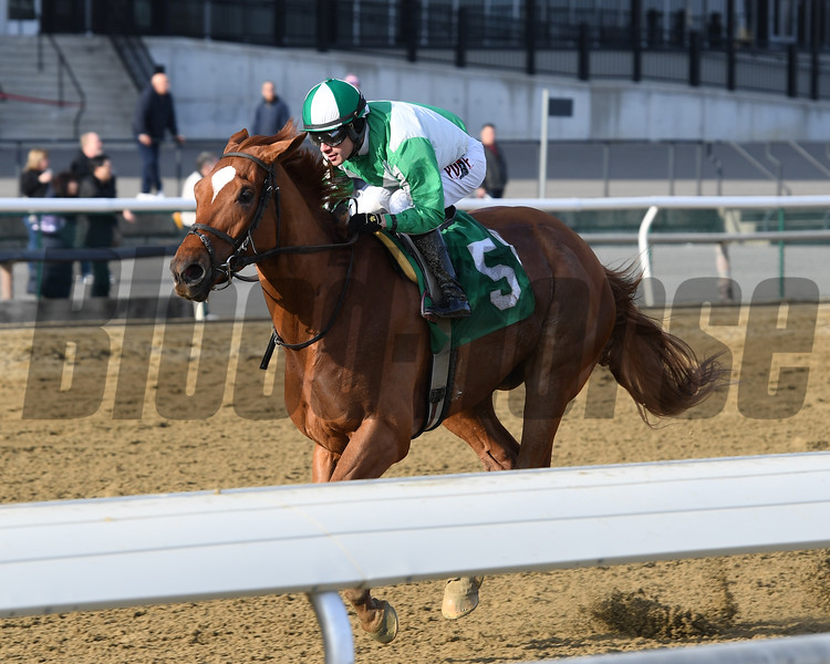 Mr. Buff wins the 2019 Alex M. Robb Stakes at Aqueduct. Photo: Coglianese Photos/Joe Labozzetta