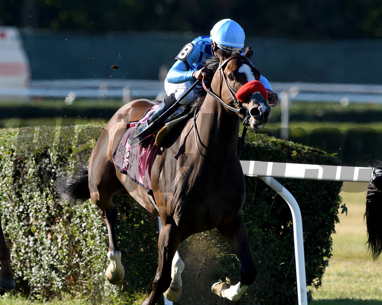 Neptune's Storm wins the 2019 Hill Prince Stakes at Belmont Park<br /> Coglianese Photos/Derbe Glass