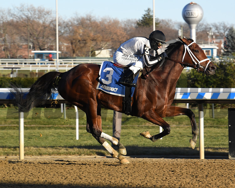 Bellera wins the 2019 Comely Stakes at Aqueduct<br /> Coglianese Photos/Susie Raisher