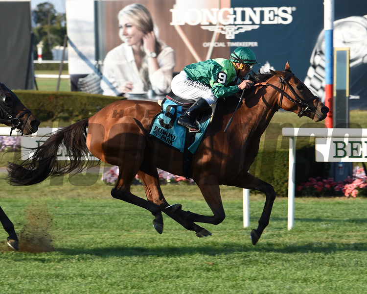 Fifty Five wins the 2019 John Hettinger Stakes at Belmont Park<br /> Coglianese Photos