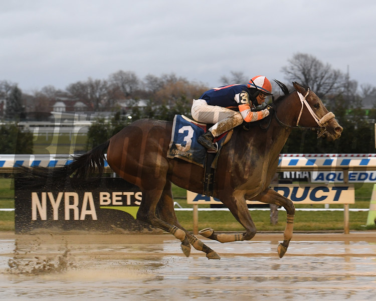 My Boy Tate wins the 2019 New York Stallion Series Stakes at Aqueduct<br /> Coglianese Photos/Susie Raisher