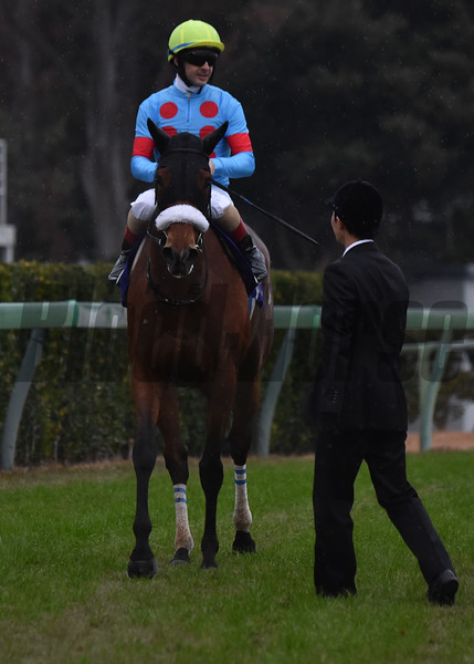 Almond Eye with Christophe Lemaire up after 2019 Arima Kinen Grand Prix. They finished 9th. Photo by Katsumi Saito
