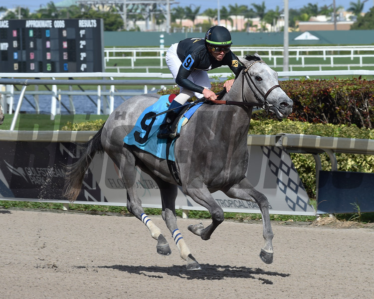 New Day Dawning wins 2019 Maiden at Gulfstream Park. Photo: Coglianese Photos/Cris Morales