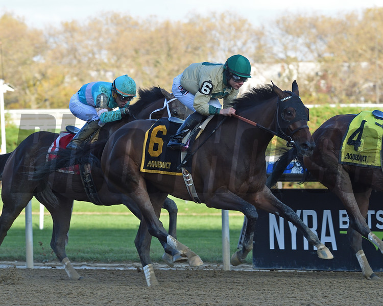 Golden Award wins the 2019 Turnback the Alarm Handicap at Aqueduct<br /> Coglianese Photos/Chelsea Durand