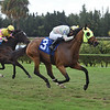 Shikaka - Maiden Win, Gulfstream Park West, November 8, 2019<br /> Coglianese Photos/Lauren King