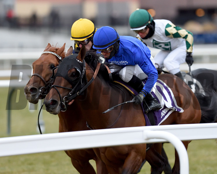 Pixelate wins the 2019 Central Park Stakes at Aqueduct<br /> Coglianese Photos/Chelsea Durand