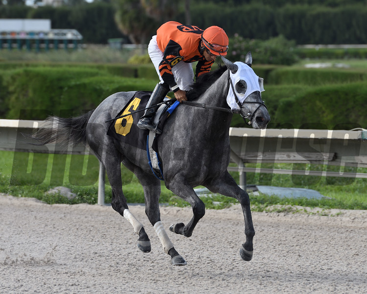 We Miss Susie - Maiden Win, Gulfstream Park West, November 7, 2019<br /> Coglianese Photos/Ryan Thompson