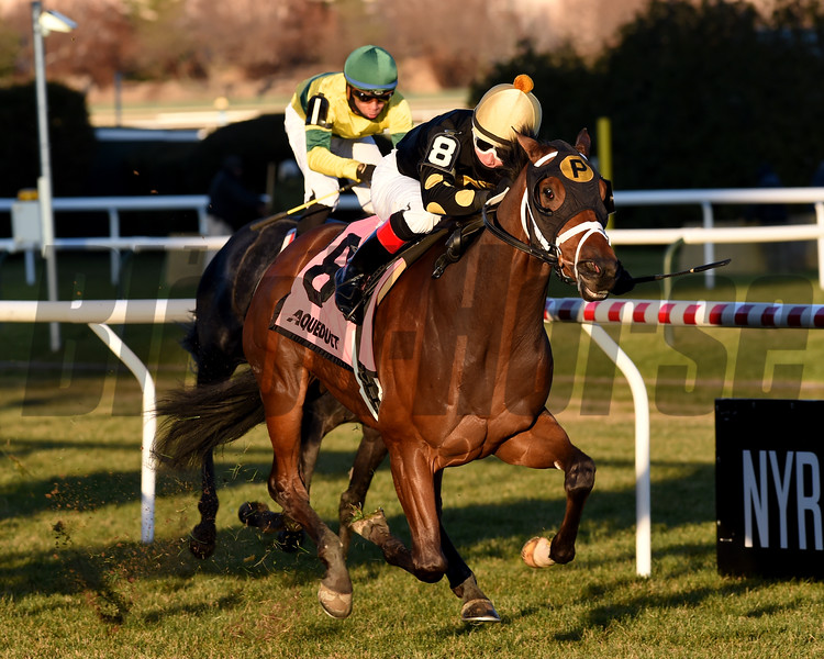 Temple wins the 2019 Gio Ponti Stakes at Aqueduct<br /> Coglianese Photos/Chelsea Durand