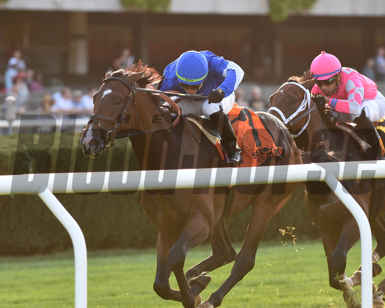 Structor wins the 2019 Pilgrim Stakes at Belmont Park<br /> Coglianese Photos/Chelsea Durand