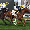 Homeland - Maiden Win, Belmont Park, October 26, 2019<br /> Coglianese Photos