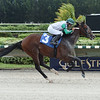 Plato wins a maiden claiming race Saturday, October 12, 2019 at Gulfstream Park West. Photo: Coglianese Photos/Lauren King