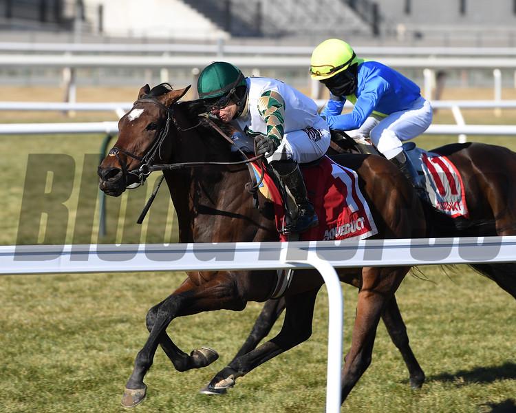 Feel Glorious wins the 2019 Winter Memories Stakes at Aqueduct<br /> Coglianese Photos/Joe Labozzetta
