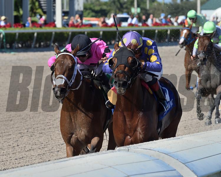 Shivaree wins the 2019 Buffalo Man Stakes at Gulfstream Park<br /> Coglianese Photos/Derbe Glass