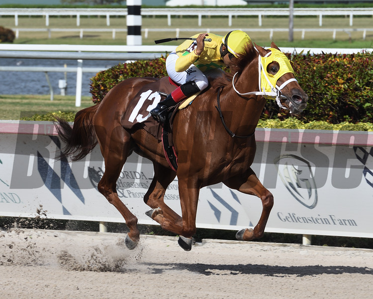 Wicksters Dream - Maiden Win, Gulfstream Park, September 29, 2019<br /> Coglianese Photos/Ryan Thompson