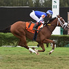 Captain D wins the 2019 Juvenile Turf Stakes at Gulfstream Park West<br /> Coglianese Photos/Lauren King