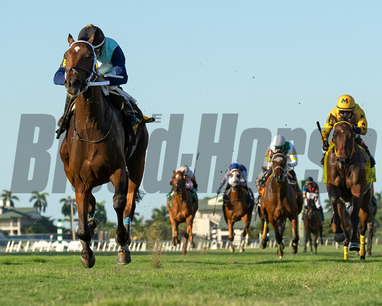 Sole Volante wins the 2019 Pulpit Stakes<br /> Coglianese Photos/Ryan Thompson