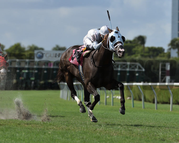 Take Charge Dude - CLM, Gulfstream Park West, October 25, 2019<br /> Coglianese Photos/Ryan Thompson