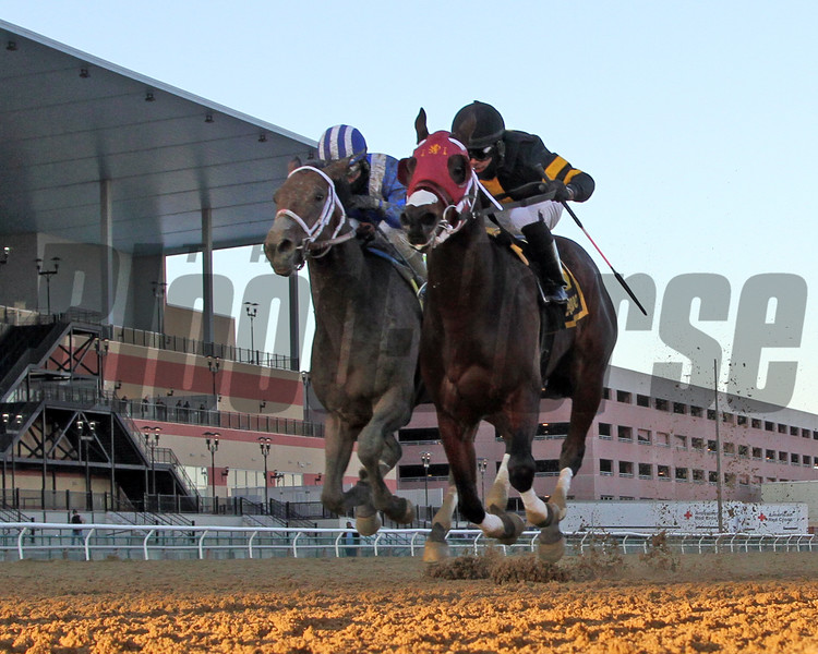 Shotski (#6) with Luis Saez win the 106th Running of the Remsen (GII) at Aqueduct on December 7, 2019 over Ajaaweed with Joel Rosario. Photo By: Chad B. Harmon