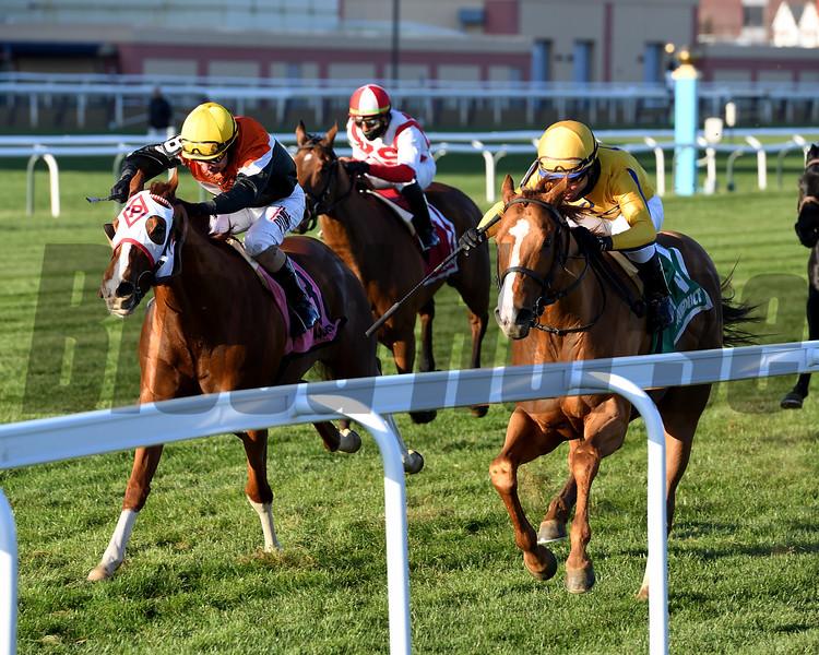 Curlin's Honor wins the 2019 Artie Schiller Stakes at Aqueduct<br /> Coglianese Photos/Joe Labozzetta