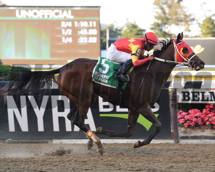 Naked Avenger wins the 2019 Joseph A. Gimma Stakes at Belmont Park<br /> Coglianese Photos/Susie Raisher