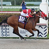 Letruska wins the 2019 Copa Invitacional del Caribe<br /> Coglianese Photos/Lauren King