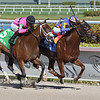 Shivaree wins the 2019 Buffalo Man Stakes at Gulfstream Park<br /> Coglianese Photos/Ryan Thompson