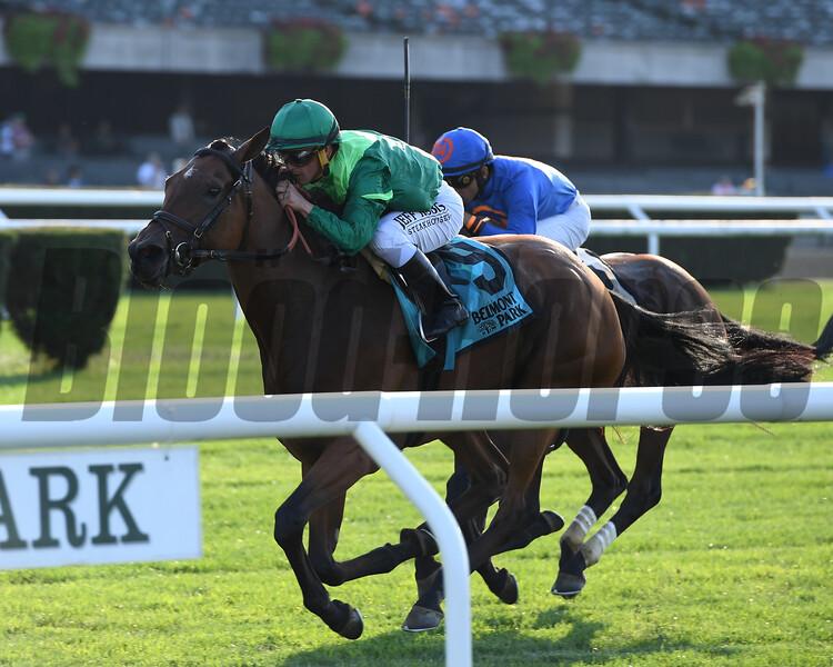 Fifty Five wins the 2019 John Hettinger Stakes at Belmont Park<br /> Coglianese Photos/Joe Labozzetta