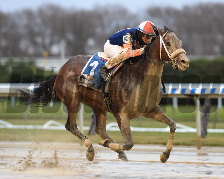 My Boy Tate wins the 2019 New York Stallion Series Stakes at Aqueduct<br /> Coglianese Photos
