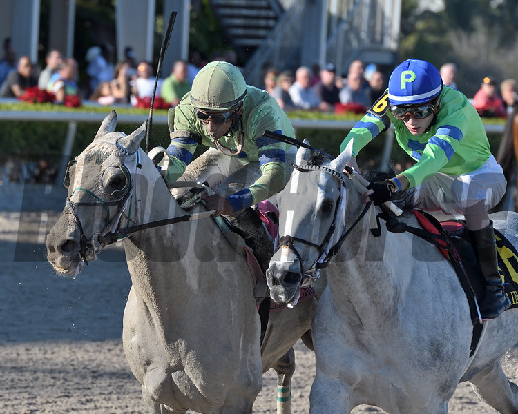 Yes I See wins the 2019 Claiming Crown Iron Horse at Gulfstream Park<br /> Coglianese Photos/Ryan Thompson