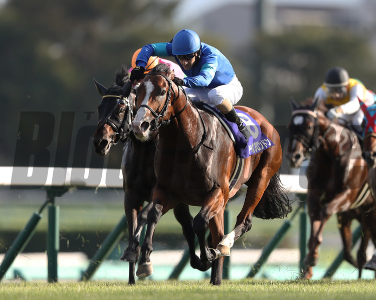 Tower of London wins 2019 Sprinters Stakes at Nakayama. Photo: Masakazu Takahashi