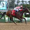 Secondary Market - Maiden Win, Belmont Park, September 14, 2019<br /> Coglianese Photos