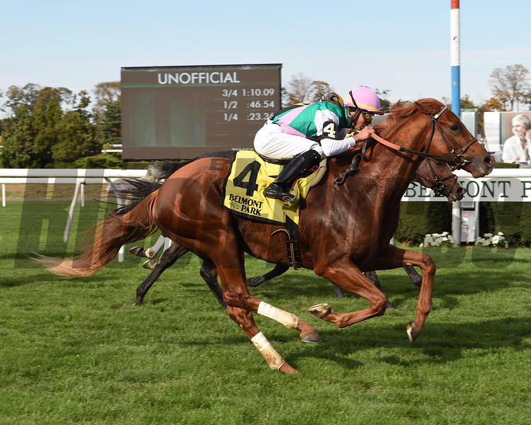 Seismic Wave wins the 2019 English Channel Stakes at Belmont Park<br /> Coglianese Photos