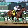 Scilly Cay - Maiden Win, Belmont Park, October 24, 2019<br /> Coglianese Photos